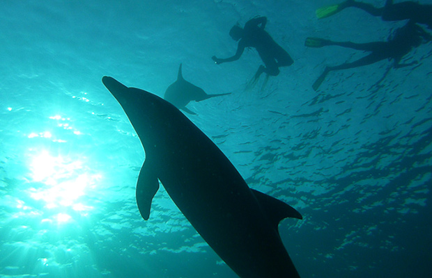delfine-ajoure-men