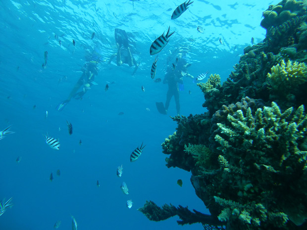 korallen-ajoure-men