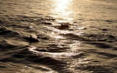delfine-ajoure-travel