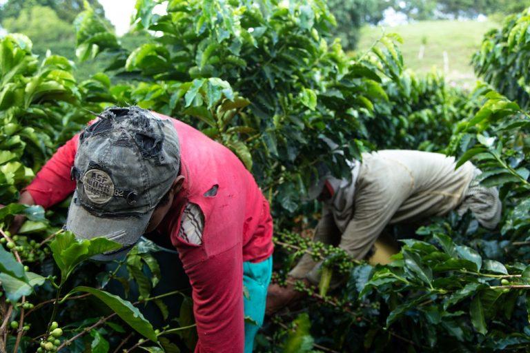 Hin und (nicht wieder) weg – die Kaffeeplantage Campo Amor