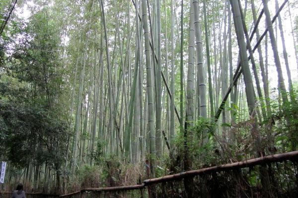Arashiyama-Bambuswald-bisweasel-flickr2