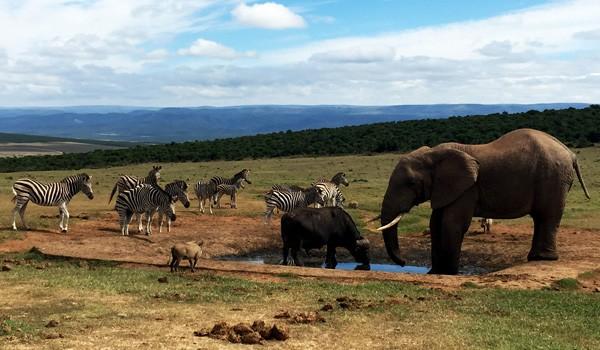 Addo-Elephant-Titelbild-ajoure-travel