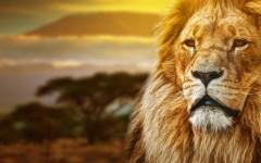 Loewe-Afrika-Theme-ajoure-travel