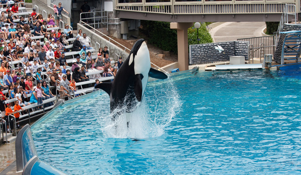 Sea-World-San-Diego-ajoure-travel