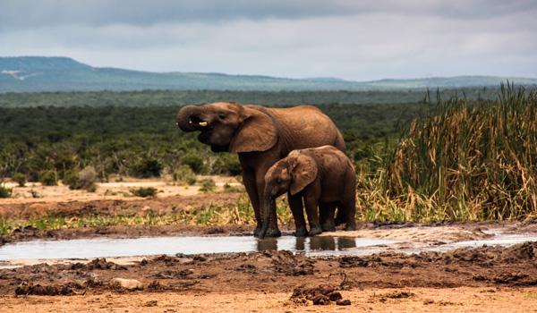 Elefanten-Addo-ajoure-travel