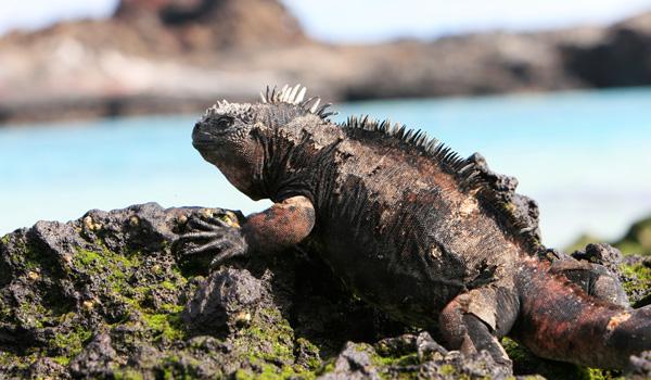 Galapagos-ajoure-travel