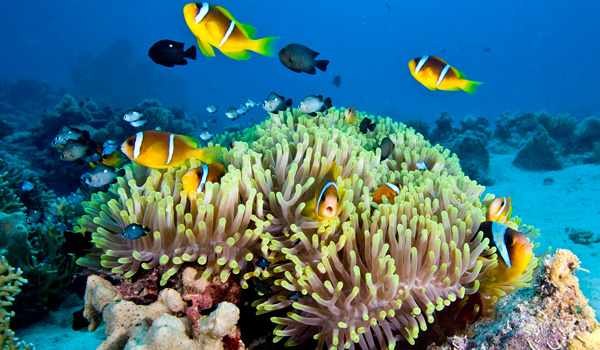 Great-Barrier-Reef-ajoure-travel
