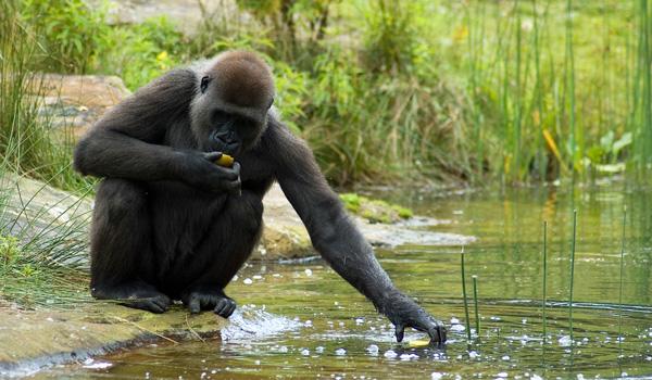 Kongo Becken-ajoure-travel