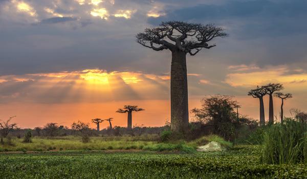 Madagaskar-ajoure-travel