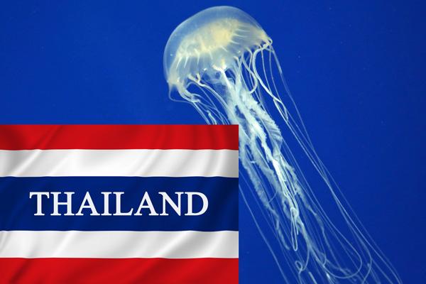 Thailand-Box-Jellyfish-ajoure-travel