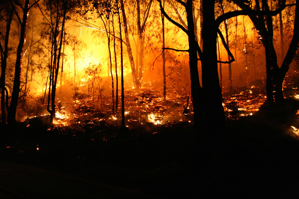 Waldbrand Kali Usa Brand Kalifornien