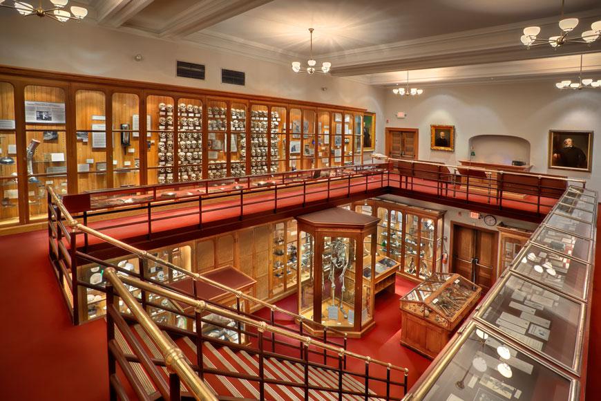 The Mütter Medical Museum