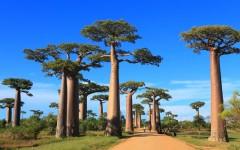 Erlebnis Madagaskar: Warum sich das Abenteuer lohnt