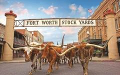 Texas Bullen
