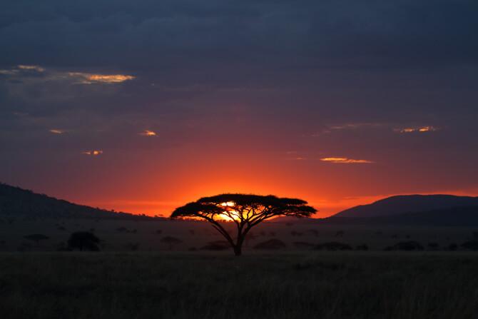 Serengeti Afrika