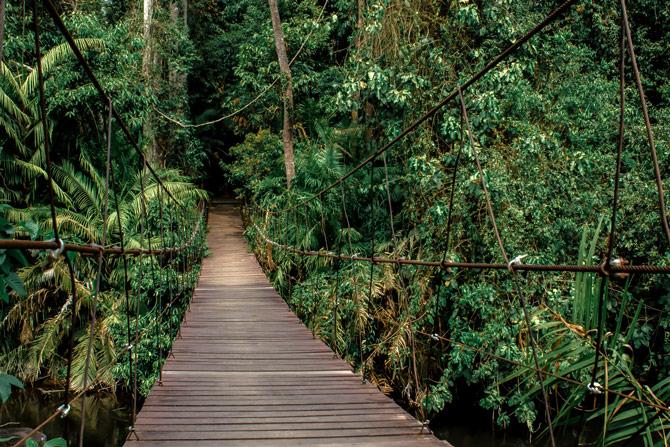 Canopy Walk Philippinen