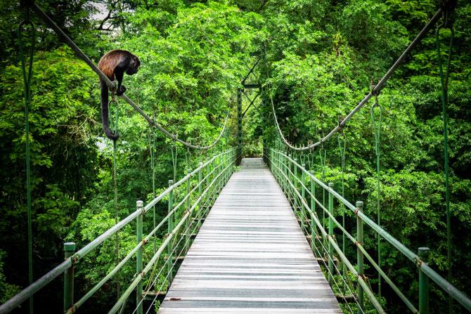 Costa Rica Karibik Dschungel