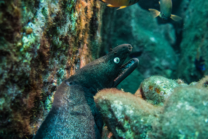 Moräne unterwasser in Madeira