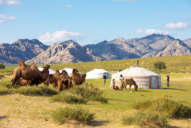 Mongolei Landscape mit Tieren