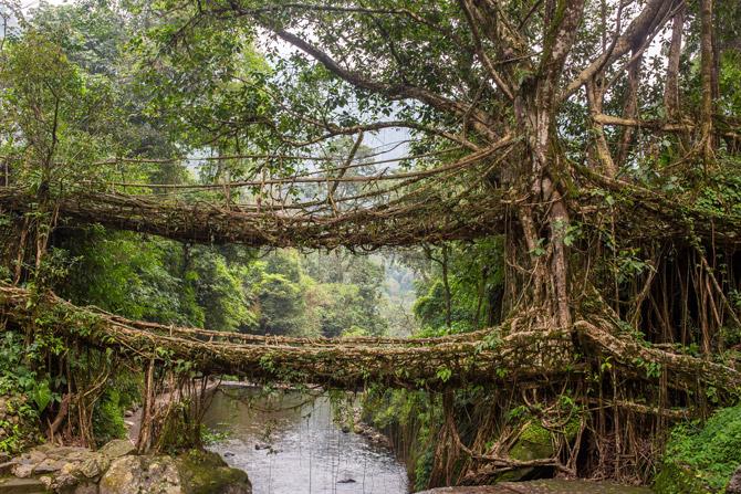Die lebende Wurzelbrücke von Meghalaya