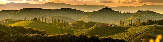 Weinberge in Österreich