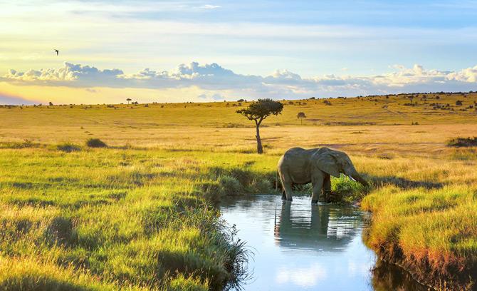 Elefant am Wasserloch Masai Mara