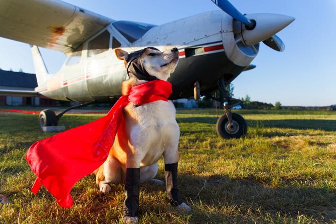 Hund und Flugzeug