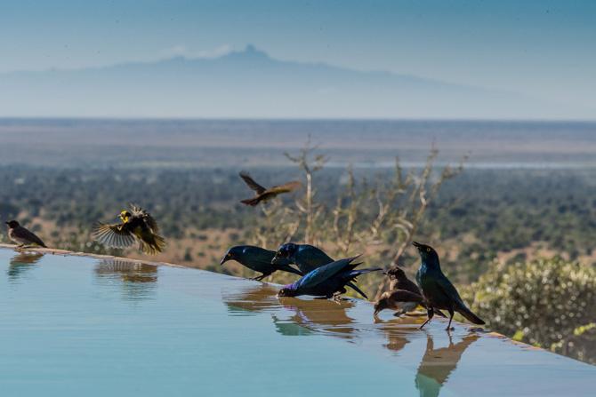 Vögel in der Savanne am Pool des Hotels