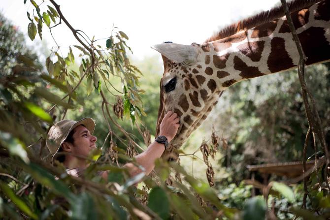 Mugie House Giraffe