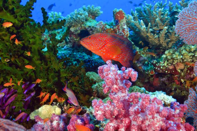 Fidschi-Inseln Unterwasserwelt